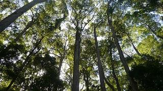 rainforest-4990982_640
