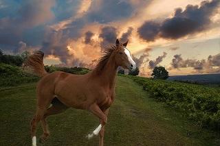 horse-2117038_640